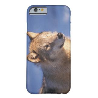 lobo gris, lupus de Canis, en las colinas de los 2 Funda Barely There iPhone 6