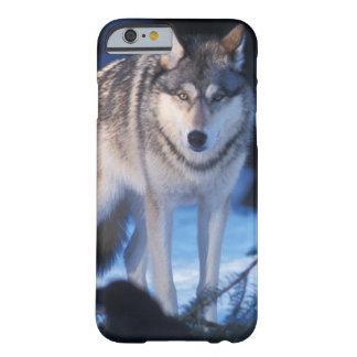 lobo gris, lupus de Canis, en las colinas de los 3 Funda De iPhone 6 Barely There