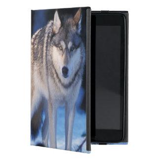 lobo gris, lupus de Canis, en las colinas de los 3 iPad Mini Cobertura