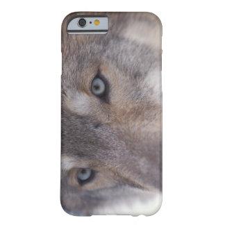 lobo gris, lupus de Canis, en las colinas del Funda Barely There iPhone 6