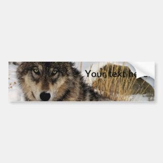 Lobo gris o lobo de madera que pone en la nieve etiqueta de parachoque