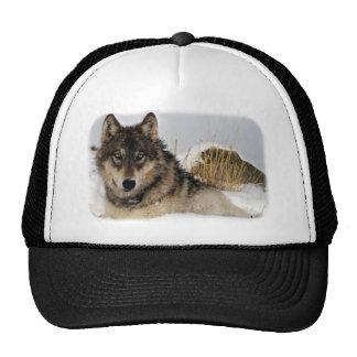Lobo gris o lobo de madera que pone en la nieve gorros bordados