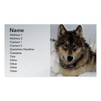 Lobo gris o lobo de madera que pone en la nieve tarjetas de visita
