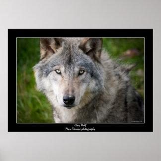 Lobo gris poster
