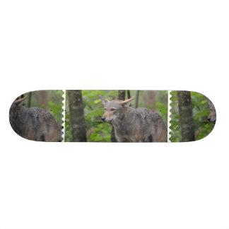 Lobo gris skateboard