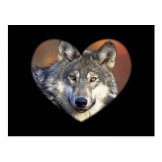 Lobo gris postales