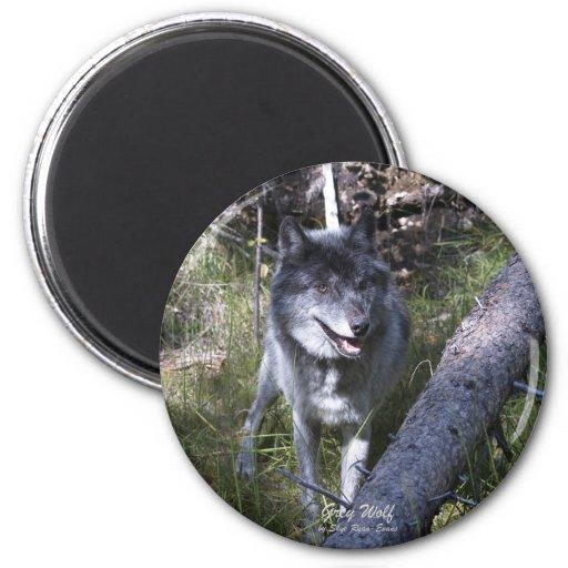 Lobo gris solitario en canadiense Rockies Imán Redondo 5 Cm