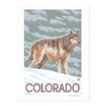 Lobo gris StandingColorado Postal