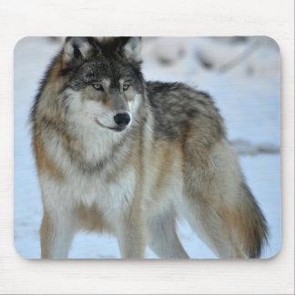 Lobo gris tapetes de ratones