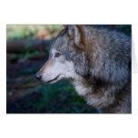 Lobo gris tarjeta