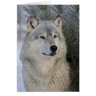 Lobo gris tarjetas