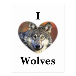 Lobo gris tarjetas postales
