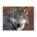 Lobo gris tarjeton