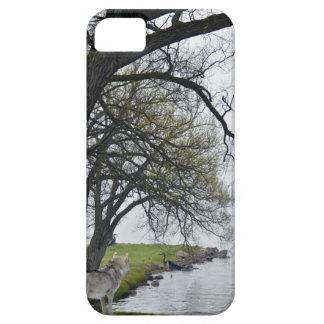 Lobo gris y garzas por el caso del iPhone 5 de la iPhone 5 Fundas