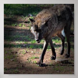 Lobo hambriento póster