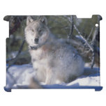 Lobo hermoso en caso del iPad de la nieve