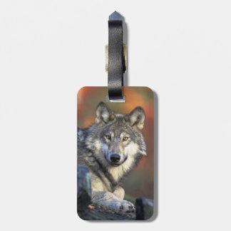 Lobo hermoso etiqueta para maleta