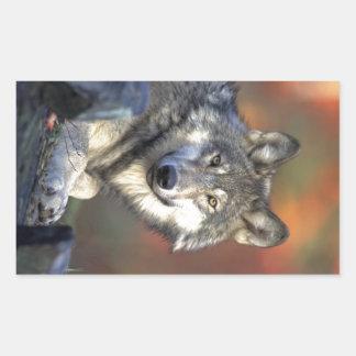 Lobo hermoso pegatina rectangular