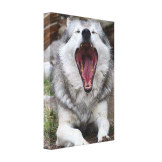 lobo lona estirada galerias