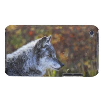 Lobo (lupus de Canis) Carcasa Para iPod