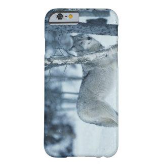 Lobo (lupus de Canis) durante invierno Funda Barely There iPhone 6
