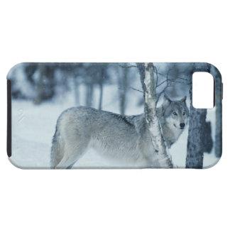 Lobo (lupus de Canis) durante invierno Funda Para iPhone SE/5/5s