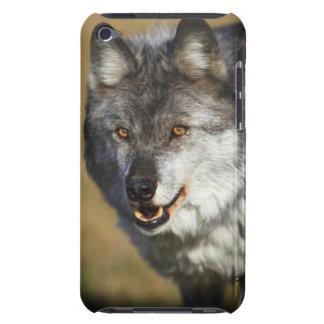 Lobo (lupus de Canis) Funda iPod