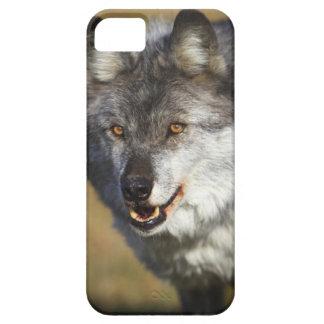 Lobo (lupus de Canis) Funda Para iPhone SE/5/5s