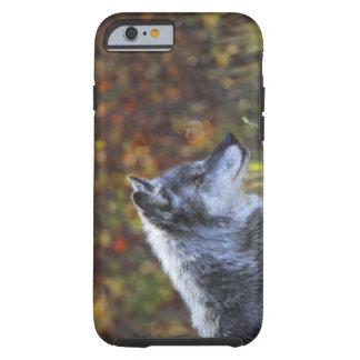 Lobo (lupus de Canis) Funda Resistente iPhone 6