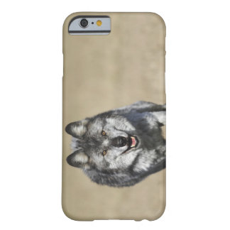 Lobo (lupus de Canis) que corre hacia cámara Funda Barely There iPhone 6
