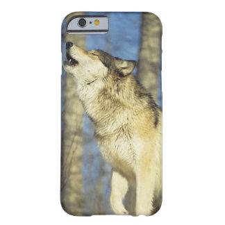 Lobo (lupus de Canis) que grita, primer, Canadá Funda Barely There iPhone 6