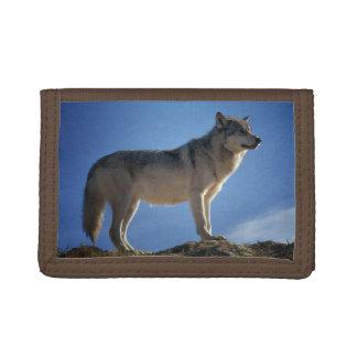 Lobo magnífico