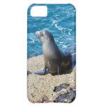 Lobo marino de las Islas Galápagos