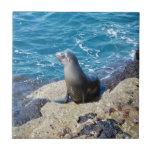 Lobo marino de las Islas Galápagos Azulejo Ceramica