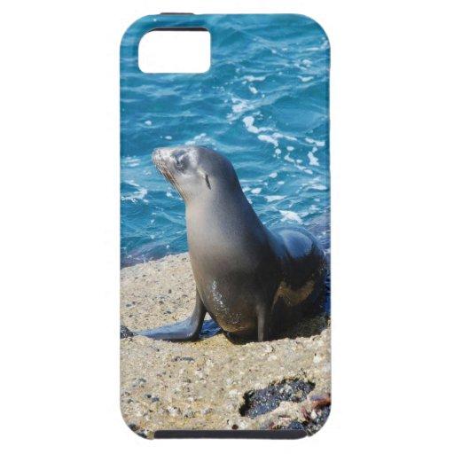 Lobo marino de las Islas Galápagos iPhone 5 Case-Mate Protector