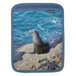 Lobo marino de las Islas Galápagos Fundas Para iPads
