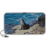 Lobo marino de las Islas Galápagos iPod Altavoz