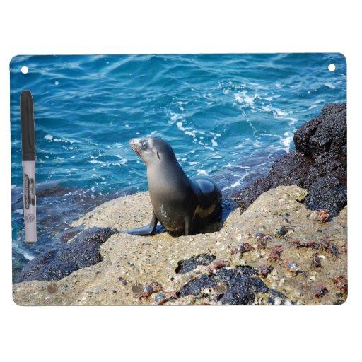 Lobo marino de las Islas Galápagos Pizarras Blancas De Calidad
