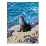 Lobo marino de las Islas Galápagos Postal