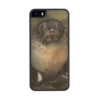 Lobo marino de Nueva Zelanda del bebé Funda De Arce Carved® Para iPhone 5