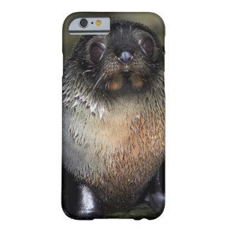 Lobo marino de Nueva Zelanda del bebé Funda De iPhone 6 Barely There