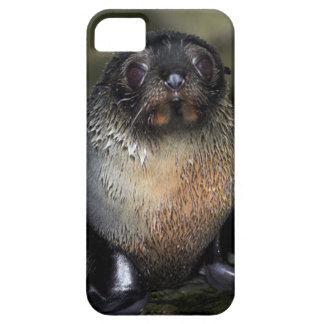 Lobo marino de Nueva Zelanda del bebé Funda Para iPhone 5 Barely There
