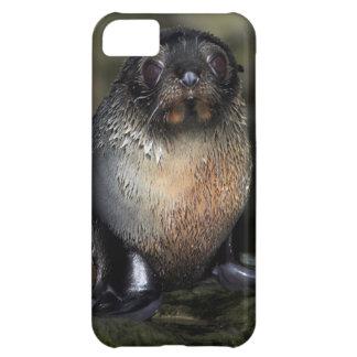Lobo marino de Nueva Zelanda del bebé Funda Para iPhone 5C