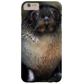 Lobo marino de Nueva Zelanda del bebé Funda Para iPhone 6 Plus Barely There