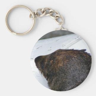 Lobo marino de NZ Llavero Redondo Tipo Pin