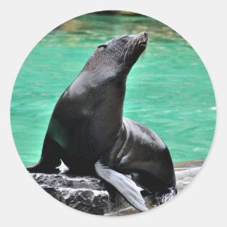 Lobo marino etiquetas redondas
