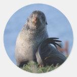 Lobo marino septentrional etiquetas redondas