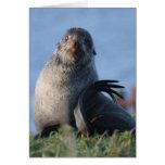 Lobo marino septentrional felicitacion