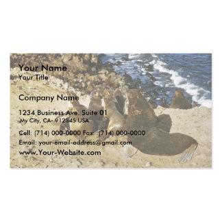 Lobo marino plantilla de tarjeta de negocio