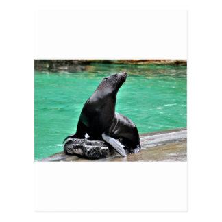 Lobo marino postal